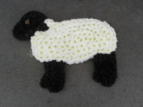 Sheep Tribute