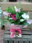 Bloom in box