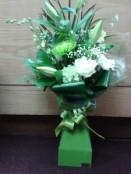 mint green aqua